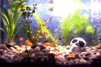 Akvárium 2004.